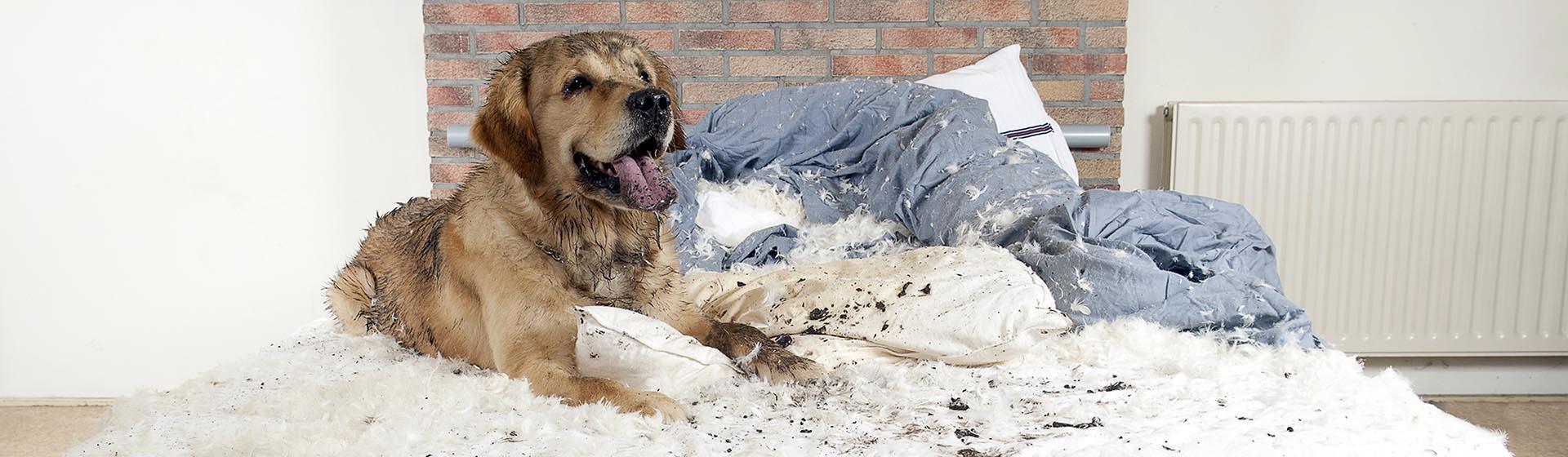 Hond bijt man: wat is verzekerd?