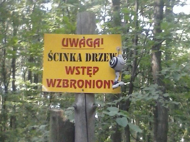 Indy in Polen